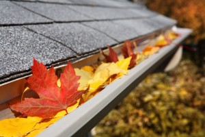 Leaves-in-Gutters